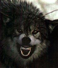 angry werewolf face - photo #11